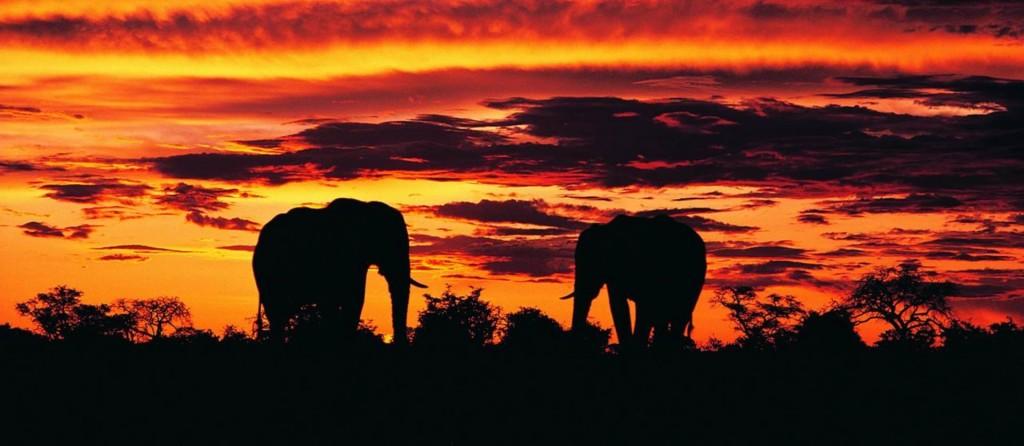 how to get to night safari