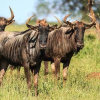 zululand safari package