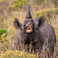 jons black rhino