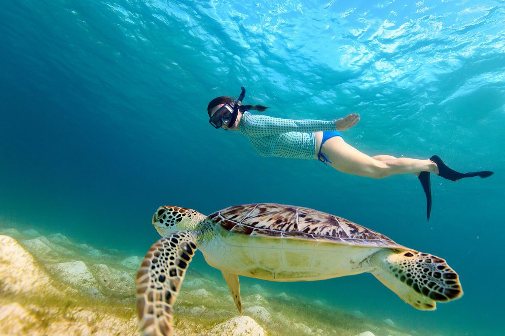 snorkeling half day safari tour