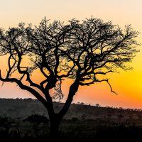 day safari options isimangaliso wetland park